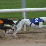 Live Greyhound Racing