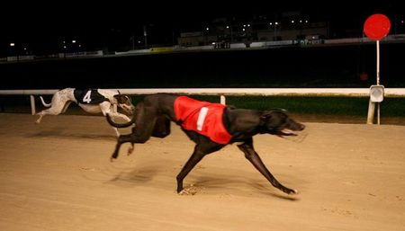 Greyhound Racing Abbreviations