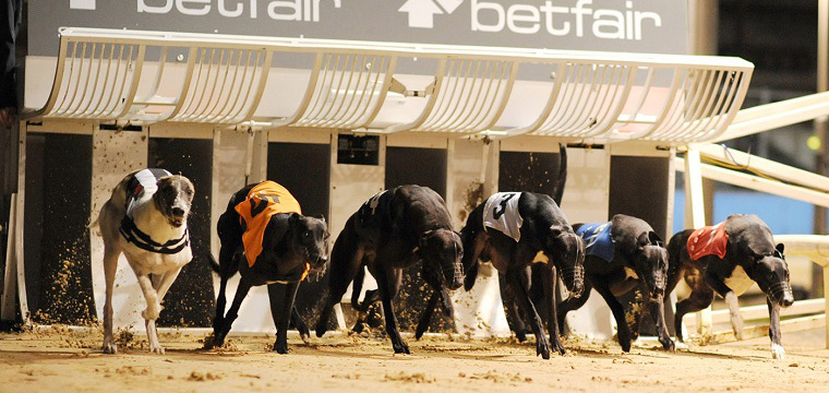2015 Greyhound Derby