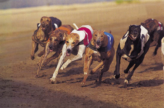 Swindon Greyhound Stadium