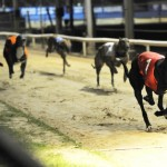 Henlow Greyhound Tips 7th Feb