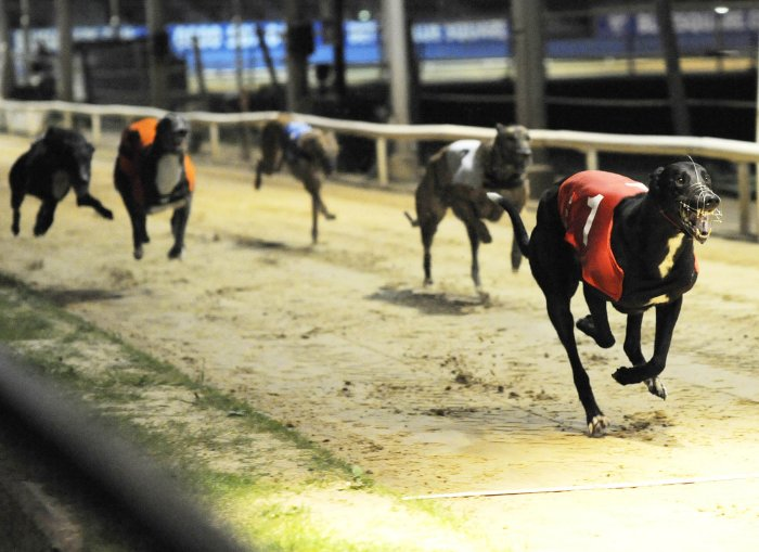 Live Sky Dogs Henlow Puppy Derby Tips 7th February