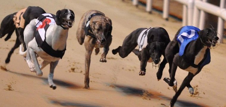Greyhound Racing Tips Sunday 7th December