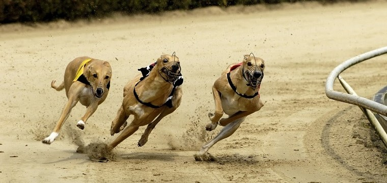 Greyhound Racing Tips Friday 28th November