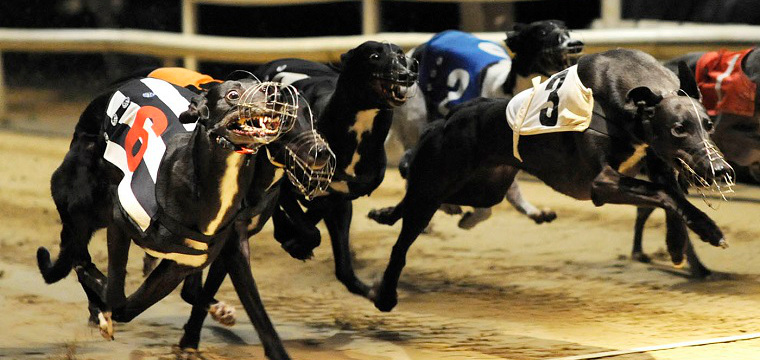 Greyhound Racing Tips Friday 17th October
