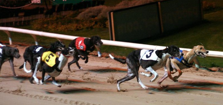 Racing Post Greyhound TV Tips Friday 3rd October