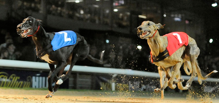 Win More On Greyhounds With Matched Betting