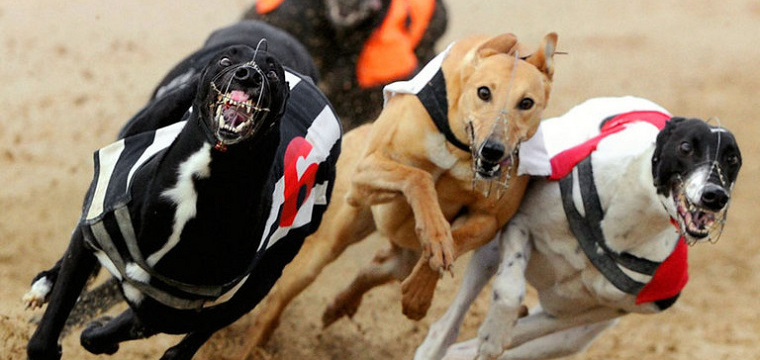 Live Sky Dogs Tips Steel City Cup Tuesday 30th September