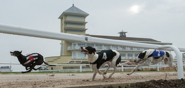 Towcester Set To Host Boxing Day Greyhounds For Third Year Running