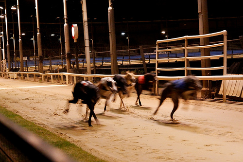 After 89 Years, the Wimbledon Greyhound Stadium Saw Its Last Night of Action